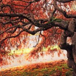 beautiful-old-tree-in-the-autumn-5936-1920x1080